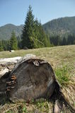 Rotten stump in a clearing in the mountains. Low Tatras, Royalty Free Stock Photos