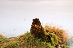 Rotten stump covered with moss at pond bank. Ice on frozen pondlevel Royalty Free Stock Images