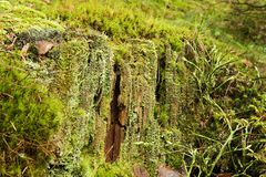 Rotten stump Stock Images