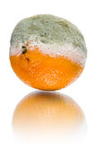Rotten tangerine Stock Photo
