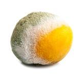 Rotten tangerine Stock Images