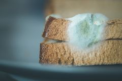 Rotten food: Moldy toast slices on a plate. Rotten toast slices with green mildew on it moldy molded food bread wheat grain bad molding microbe infected damaged royalty free stock images
