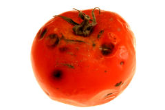 Rotten tomato 2 Royalty Free Stock Photo