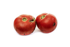 Rotten tomato. Es on white background Stock Photography