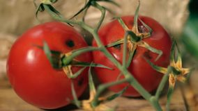 Rotten Tomatoes on Wooden Background focusing. Rotten Tomatoes on Wooden Background close up stock video footage
