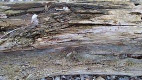 Rotten tree Stock Photo