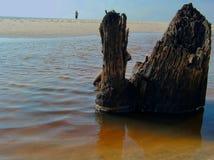 Rotten tree stump