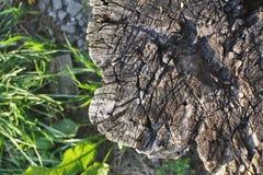 Rotten tree stump Stock Photography