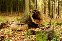 Rotten Tree Trunk Stock Photos