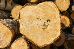 Smiling face. Closeup of sawed tree trunks. royalty free stock photography