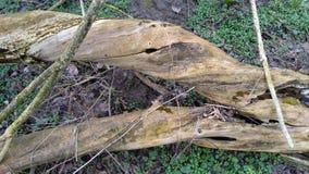 Rotten tree Stock Image