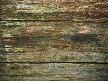Rotten wood. The rotten mossy wood background Stock Images