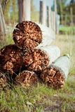 Rotten wood Stock Image