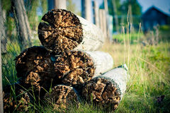 Rotten wood Royalty Free Stock Photos