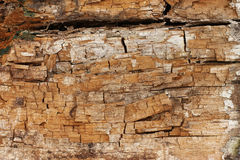 Rotten wood Royalty Free Stock Image