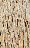 Rotten wood close up Stock Images
