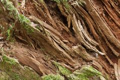 Rotten wood closeup Stock Images