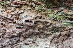 Rotten wood Stock Photography