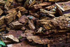 Rotten wood. Nature perfection, rotten wood broken into geometric blocks Royalty Free Stock Images