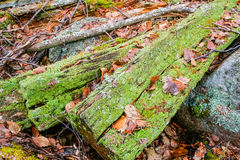 Rotten wood remains Royalty Free Stock Photo