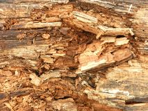 Rotten Wood Texture. A detail of the texture of rotten wood (brown rot Stock Photos