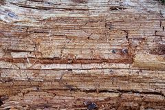 Rotten wood. Wood texture. Forest, nature stock photos