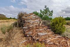 Rotten wood trunks in the wild Stock Photography