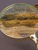 Rotten wood viewed using a magnifier. Stock Photography
