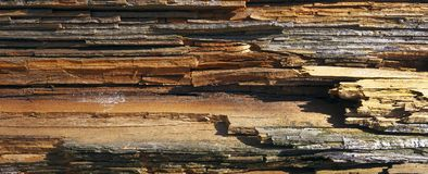 Rotten wood. Royalty Free Stock Images
