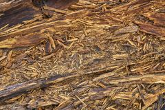 Rotten wooden boards Royalty Free Stock Image