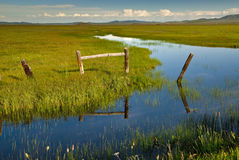 Rotten wooden fence on the edge of a marsh Stock Photos