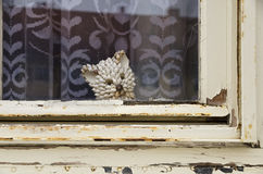 Rotten wooden window with a cat made by seashells Royalty Free Stock Image