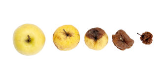 Rottende appel. Royalty-vrije Stock Fotografie