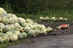 Rottende meloenen Royalty-vrije Stock Fotografie