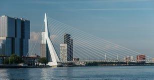 Rotterdam miasta pejzażu miejskiego linia horyzontu z Erasmus rzeką i mostem Południowy Holandia, holandie Obrazy Royalty Free