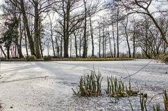 Thin ice on a pond royalty free stock photo