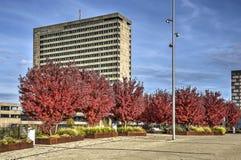 Autumn at Erasmus university. Rotterdam, The Netherlands, October 30, 2016: the campus of Erasmus university in autumn colors stock image