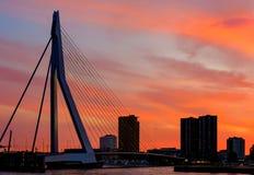 Rotterdam stadscityscape med Erasmus-bron på solnedgången Royaltyfri Bild
