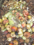 Rotting Apples. And kitchen waste on a compost heap Royalty Free Stock Photo