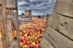 Rotting apples and crates Royalty Free Stock Photography