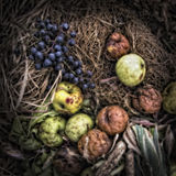 Rotting Apples and Grapes Royalty Free Stock Photography