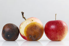 Rotting apples on a wooden table Stock Photography