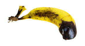 Rotting banana side view. A rotting banana with mold isolated on a white background Stock Photo