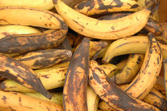 Rotting bananas Royalty Free Stock Photography
