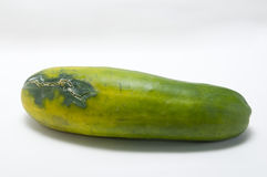 The rotting cucumber Royalty Free Stock Image