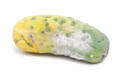 The rotting cucumber Stock Photo