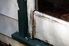 Rotting door detail Royalty Free Stock Images