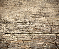 Rotting dry wooden background. Rotting dry  wooden west background damaged by weather and parasites Stock Photo