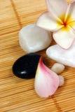 rotting för pebbles för bakgrundsblommafrangipane Royaltyfri Foto