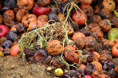 Free Rotting Fruit Compost Royalty Free Stock Photography - 49086287